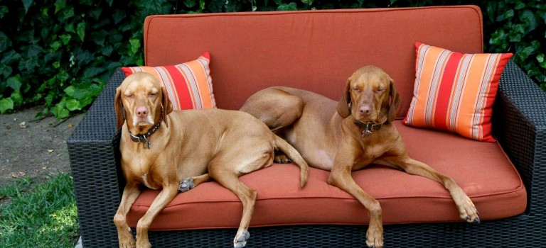 Pet Peeves: Protecting Furniture from Your Pups
